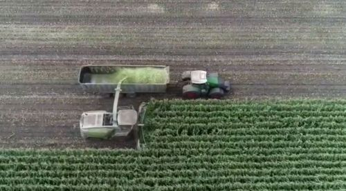 На полях «Бучачагрохлібпрому» заготівля кормів для ВРХ – у повному розпалі