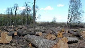 За минулий рік в області виявлено незаконних вирубок на 4 мільйони гривень (відео)
